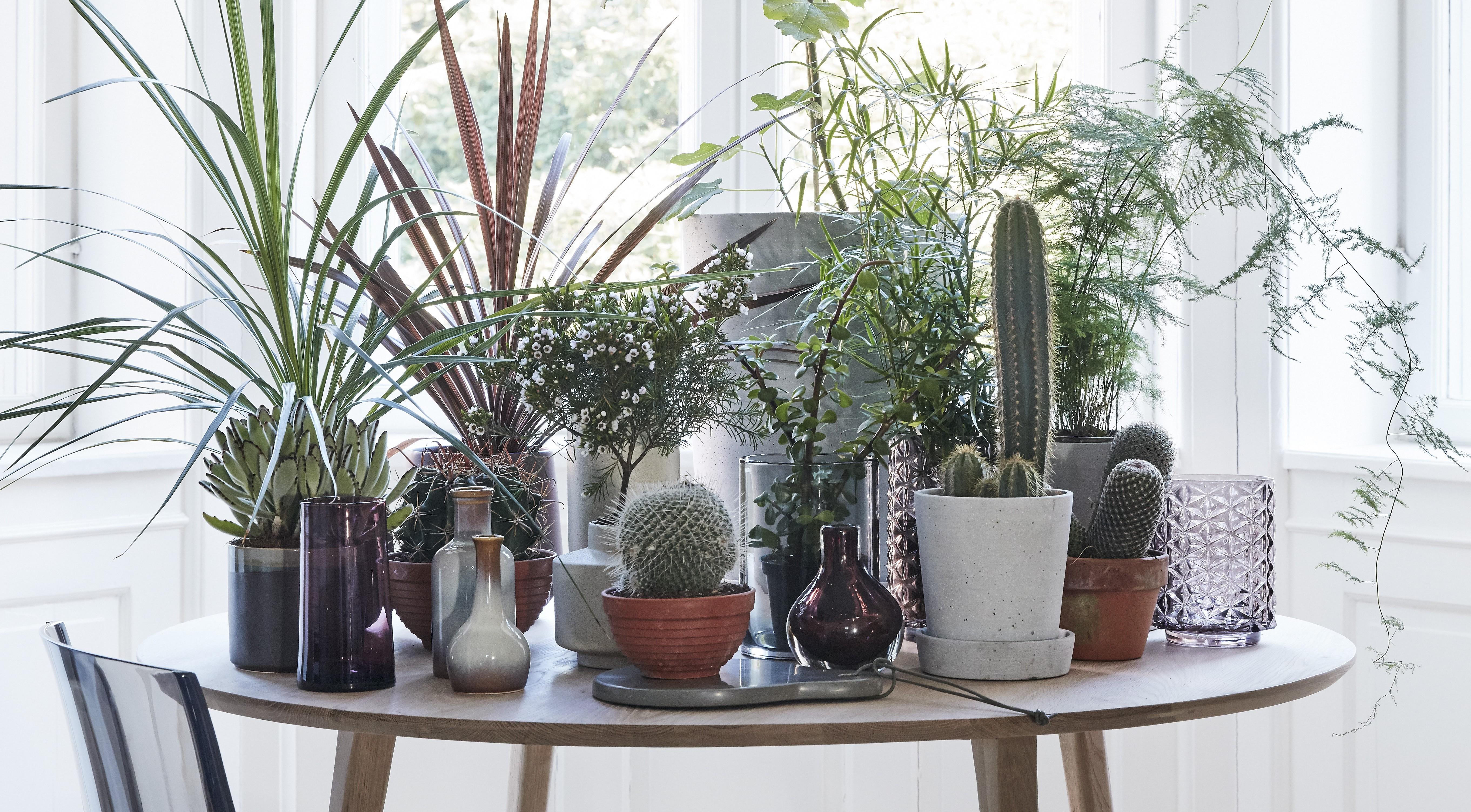 Växter som trivs i söderfönster