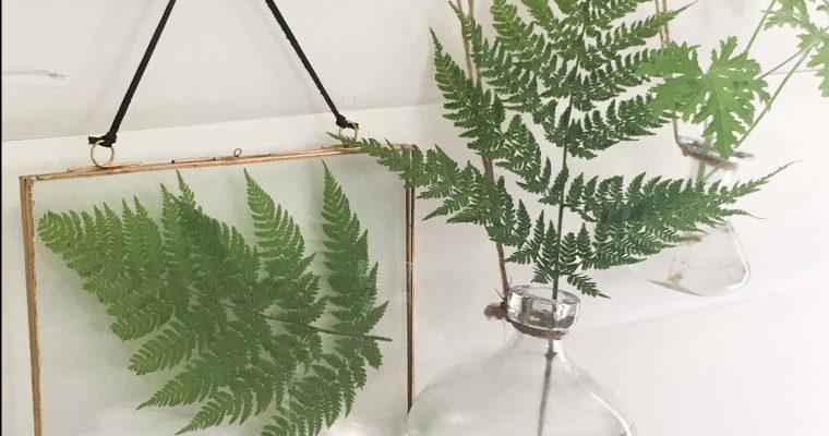 DIY – gör din egen växttavla i glasram