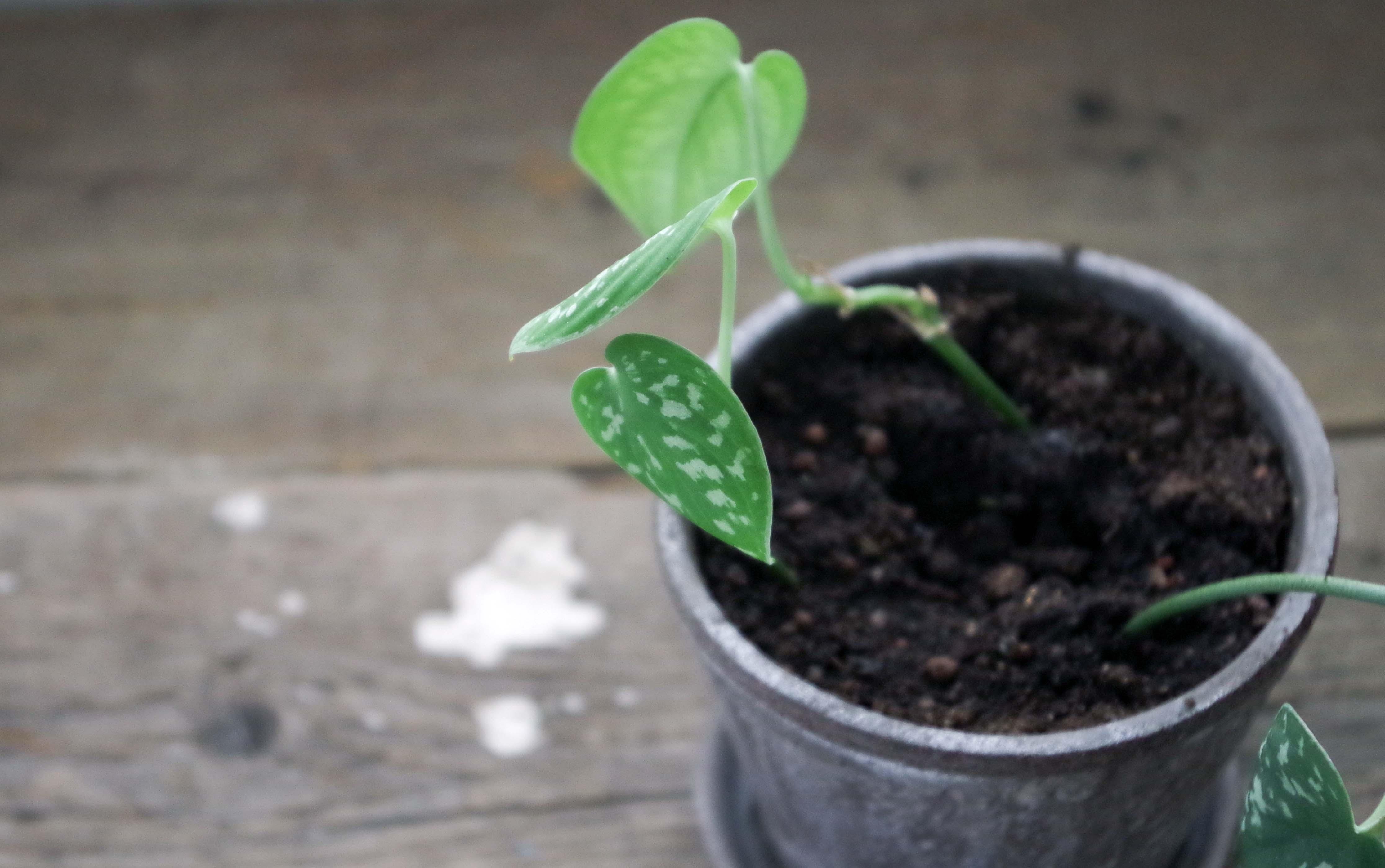 Nya tag med projekt växtgardin