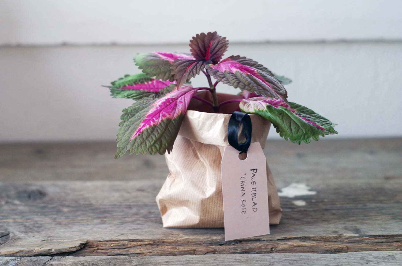 Sticklingar – finaste gå-bort-presenten