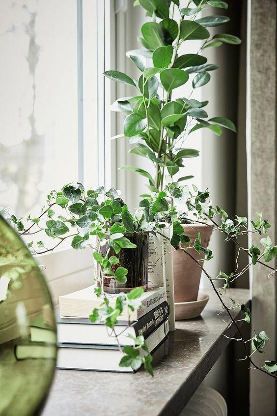 gröna växter fönster