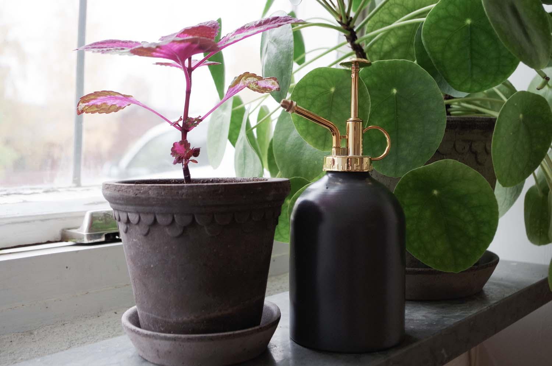 Förbered växterna för vintermörkret