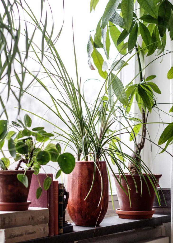 gröna växter direkt solljus