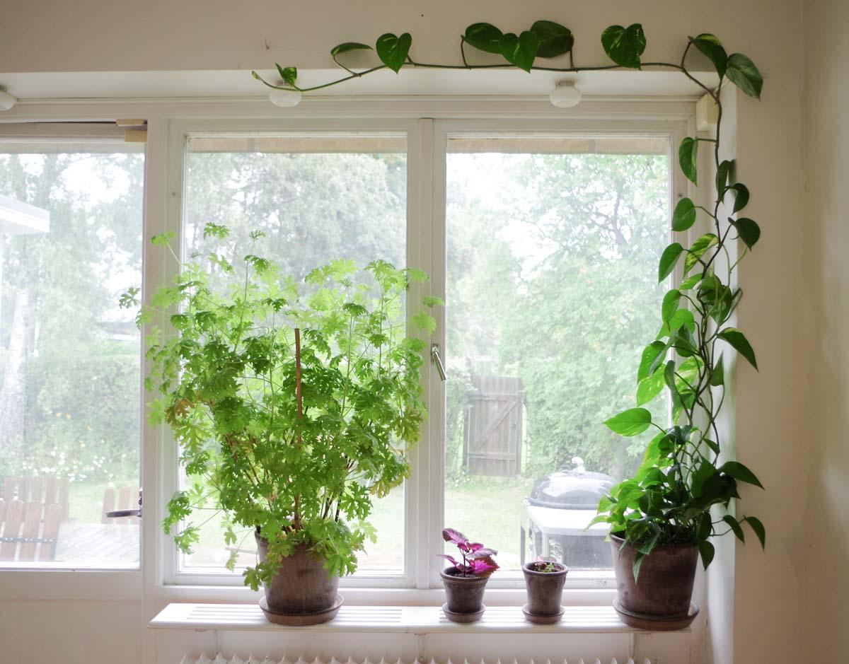 Växtgardin uppdatering