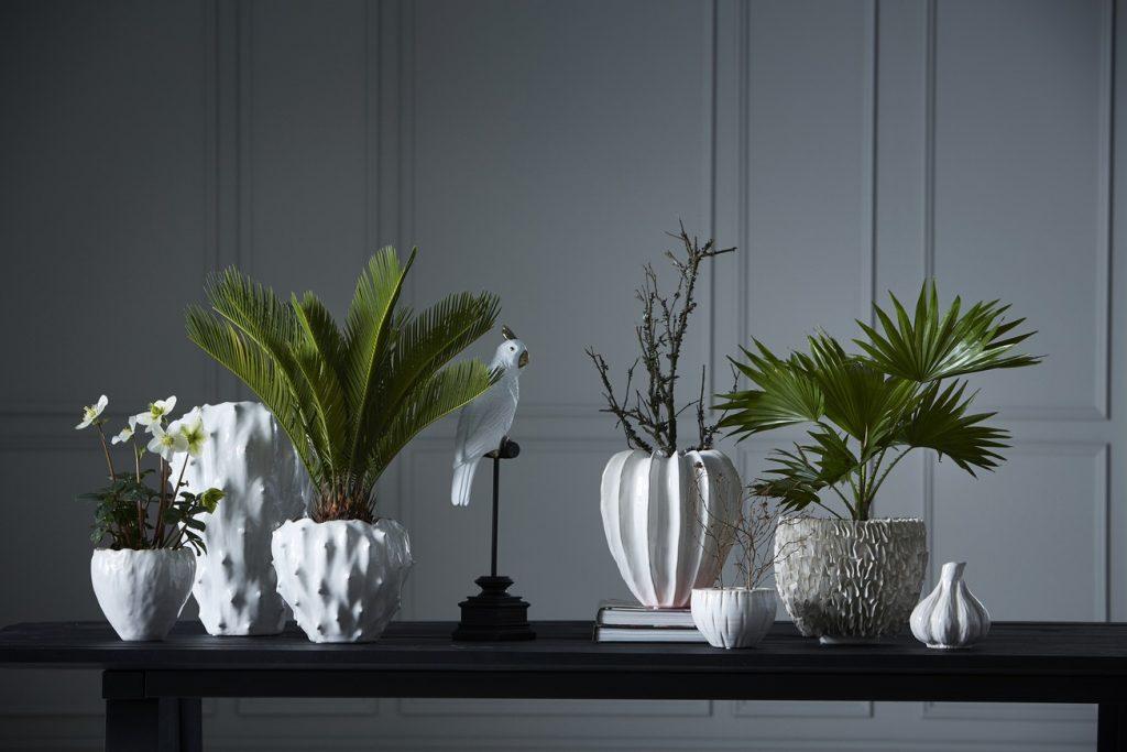 Stilleben med växter