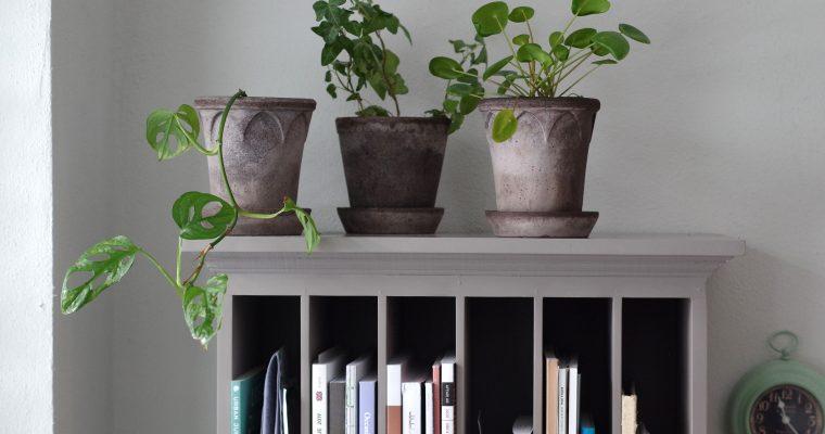 När ljuset återvänder spritter det i växterna