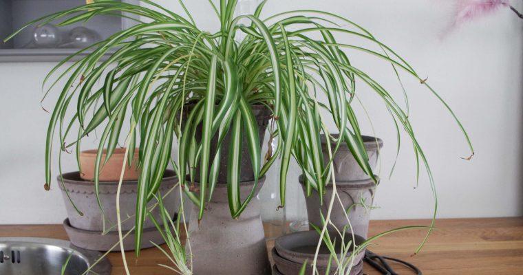 Tips till förvaring av växtprylar