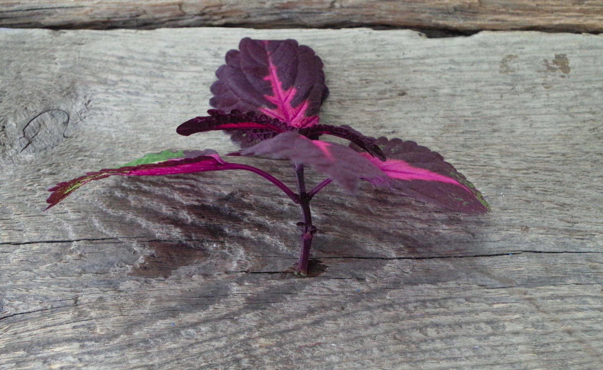 Uppstammat palettblad – en uppdatering