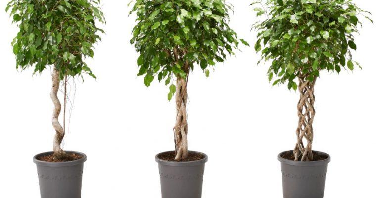 Fläta palettblad – veckans växtbestyr!