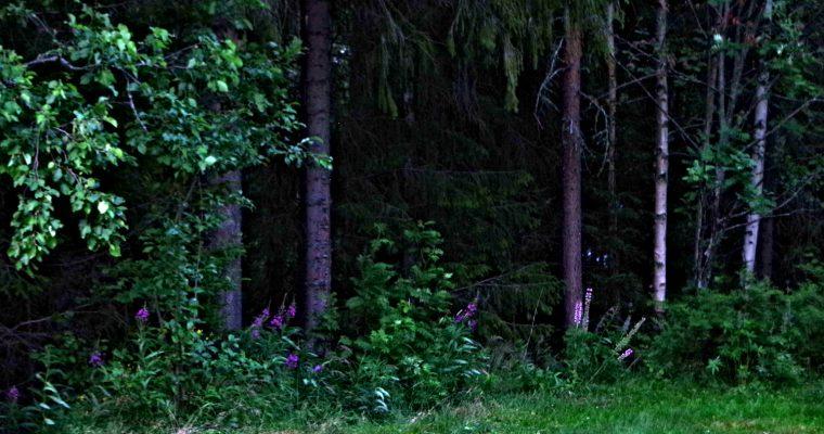 Magiska skogspromenader