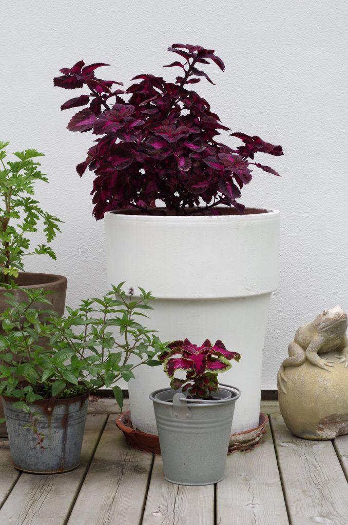 palettblad utomhus
