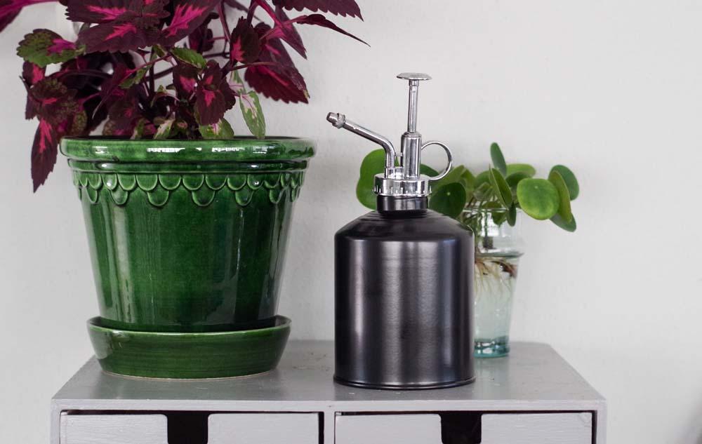 duscha växter med sprayflaska