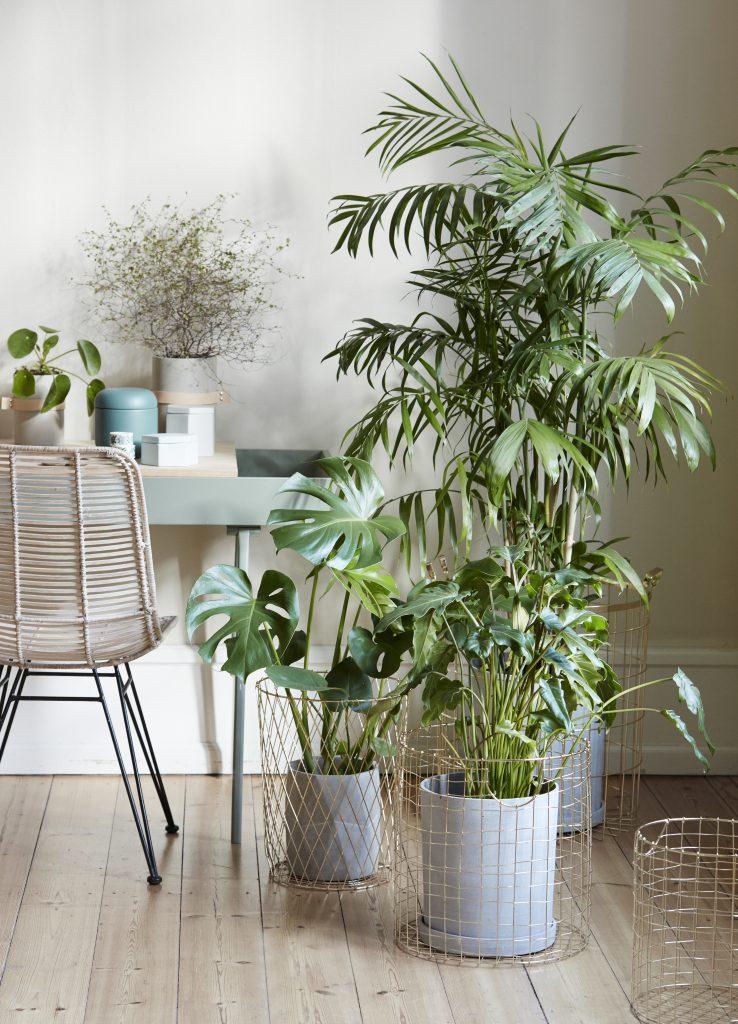 Inreda med växter, skapa växtstilleben