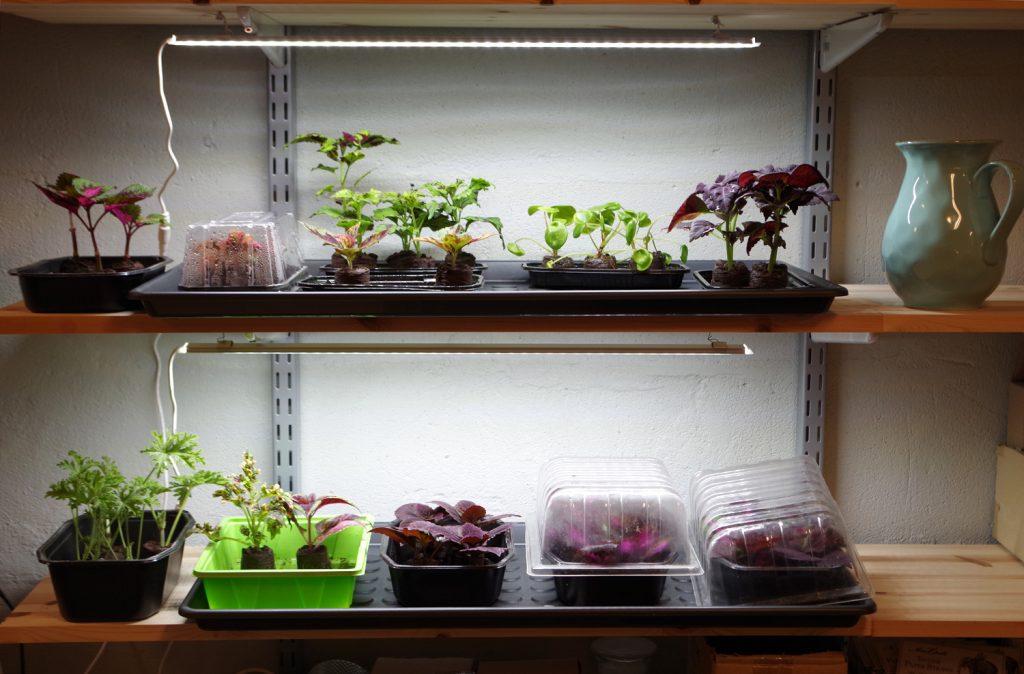 odlingsstation med växtbelysning