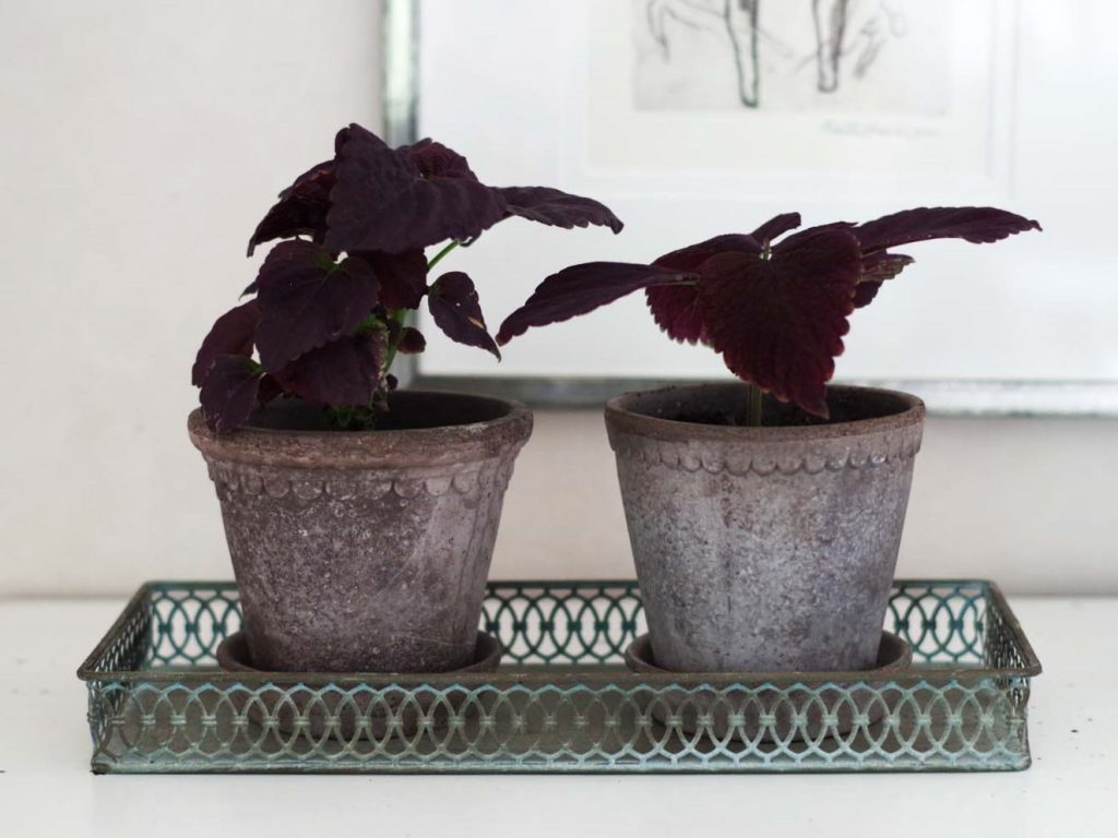 Hjälp mot ohyra i växterna