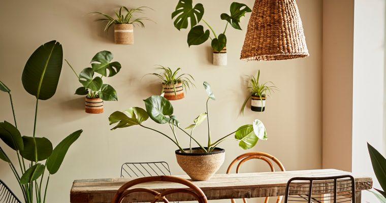 Trend – skapa växtstilleben på väggen