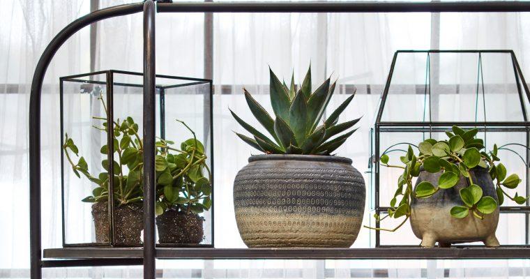 Välj rätt växter och slipp ohyra