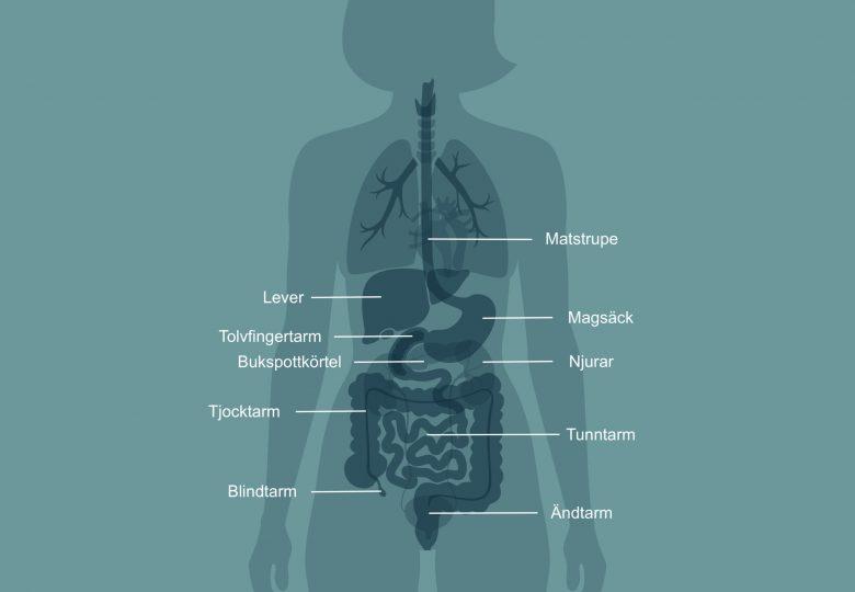 Mag-tarmkanalen Copyright boken Hälsokoden