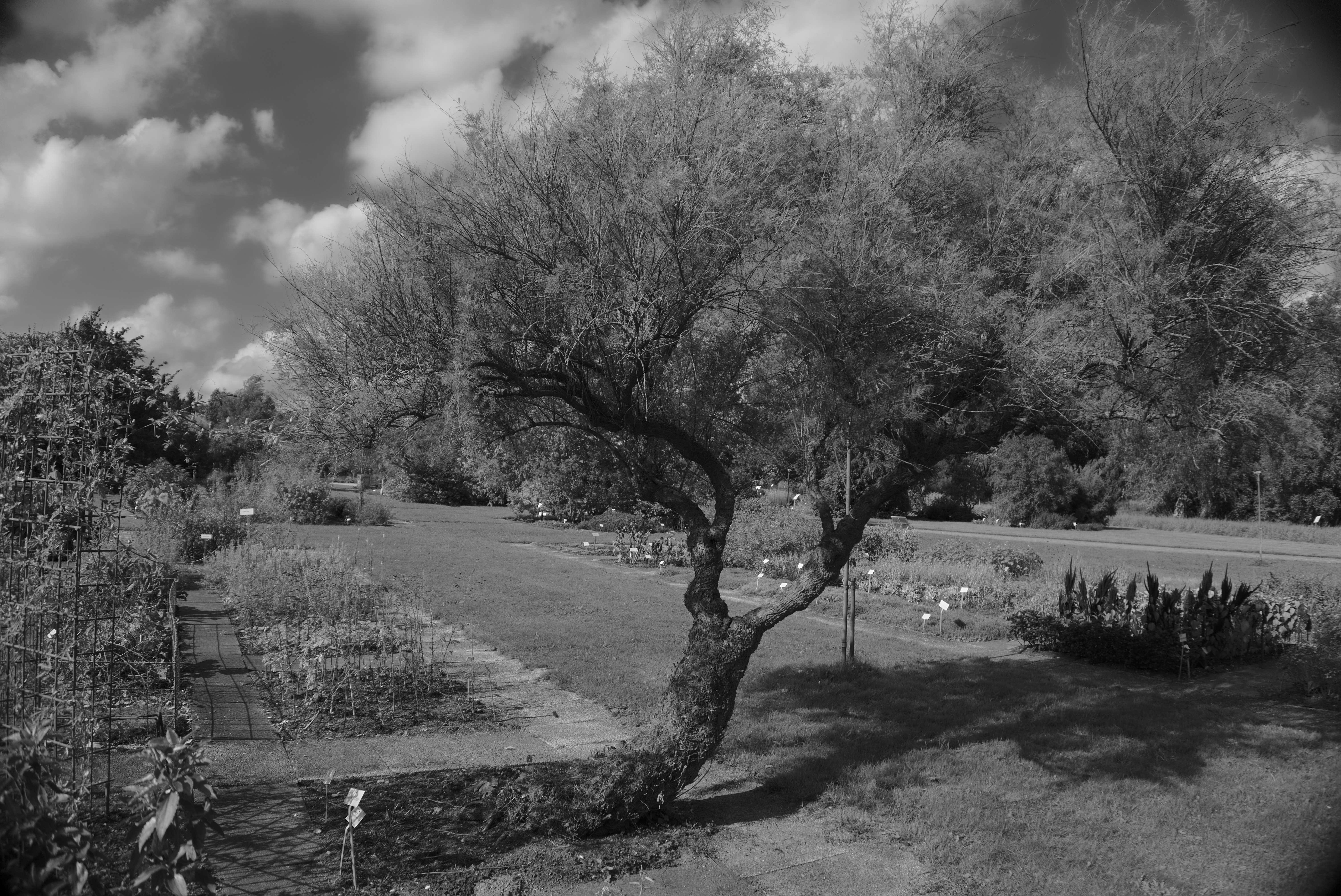 Tree in Botanical Garden
