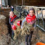 boerderij dieren voederen