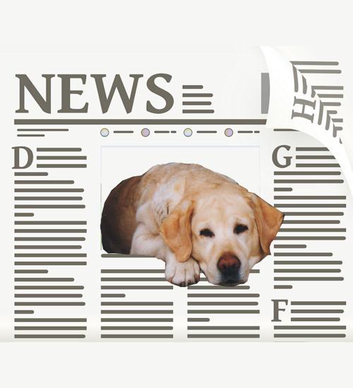 Boldwinds Nyheter