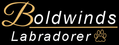 Boldwinds logga
