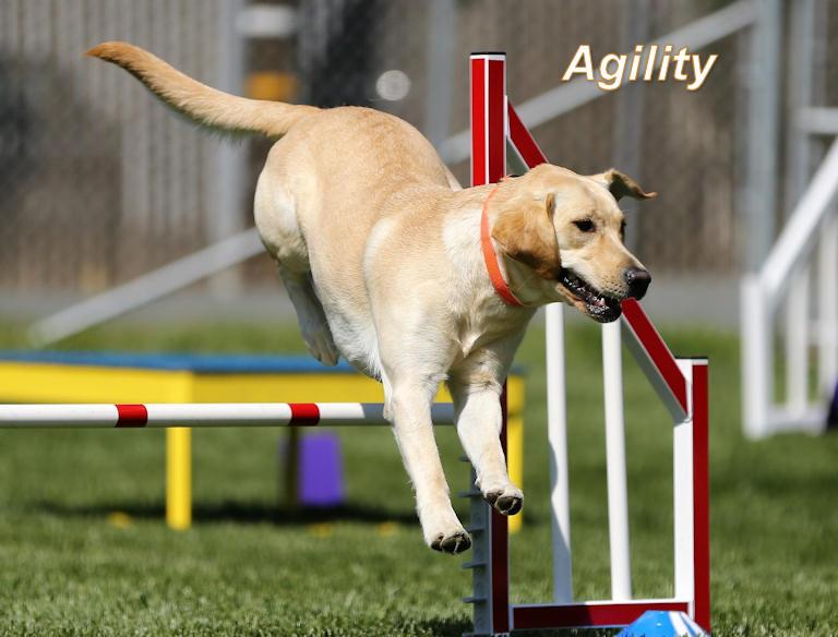 agillity