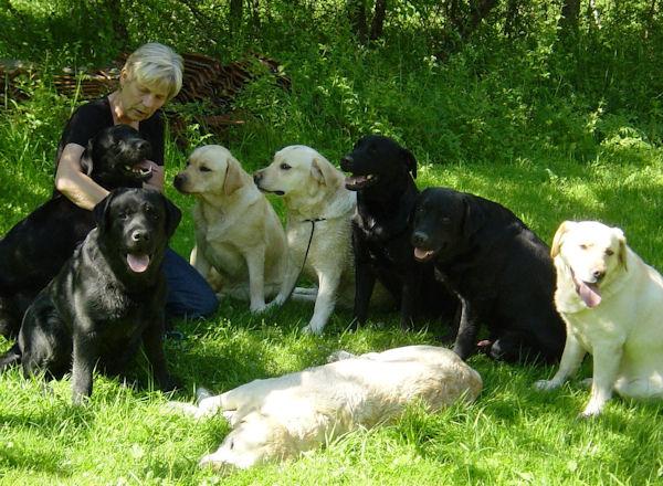 anitha med Boldwinds labradorer
