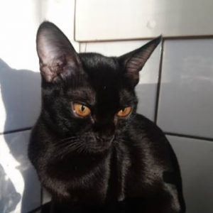 Ninja Black Magic Valua owner:Ilga Liljenberg