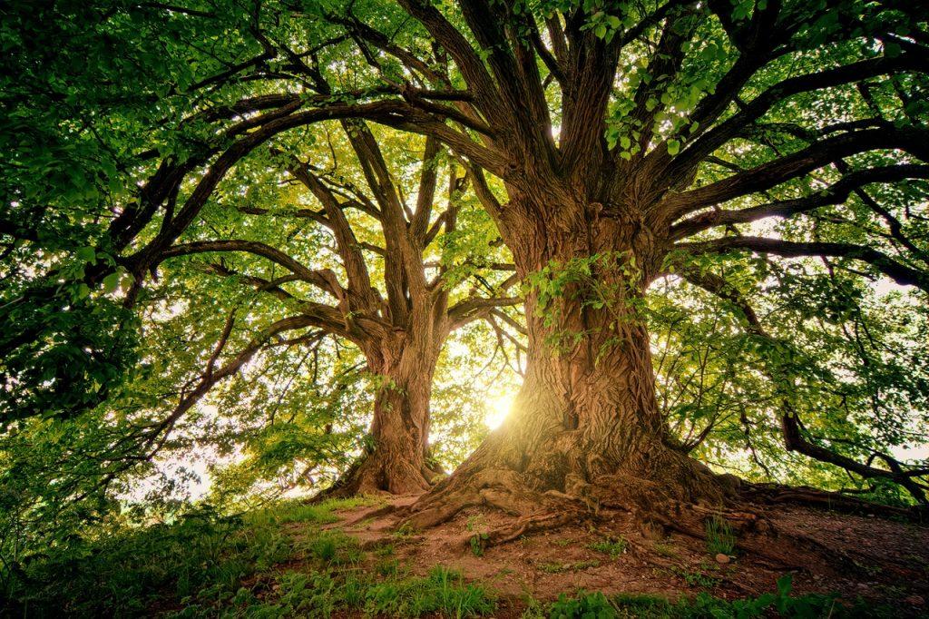 Treecare Ward Huysmans