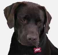 joy-new