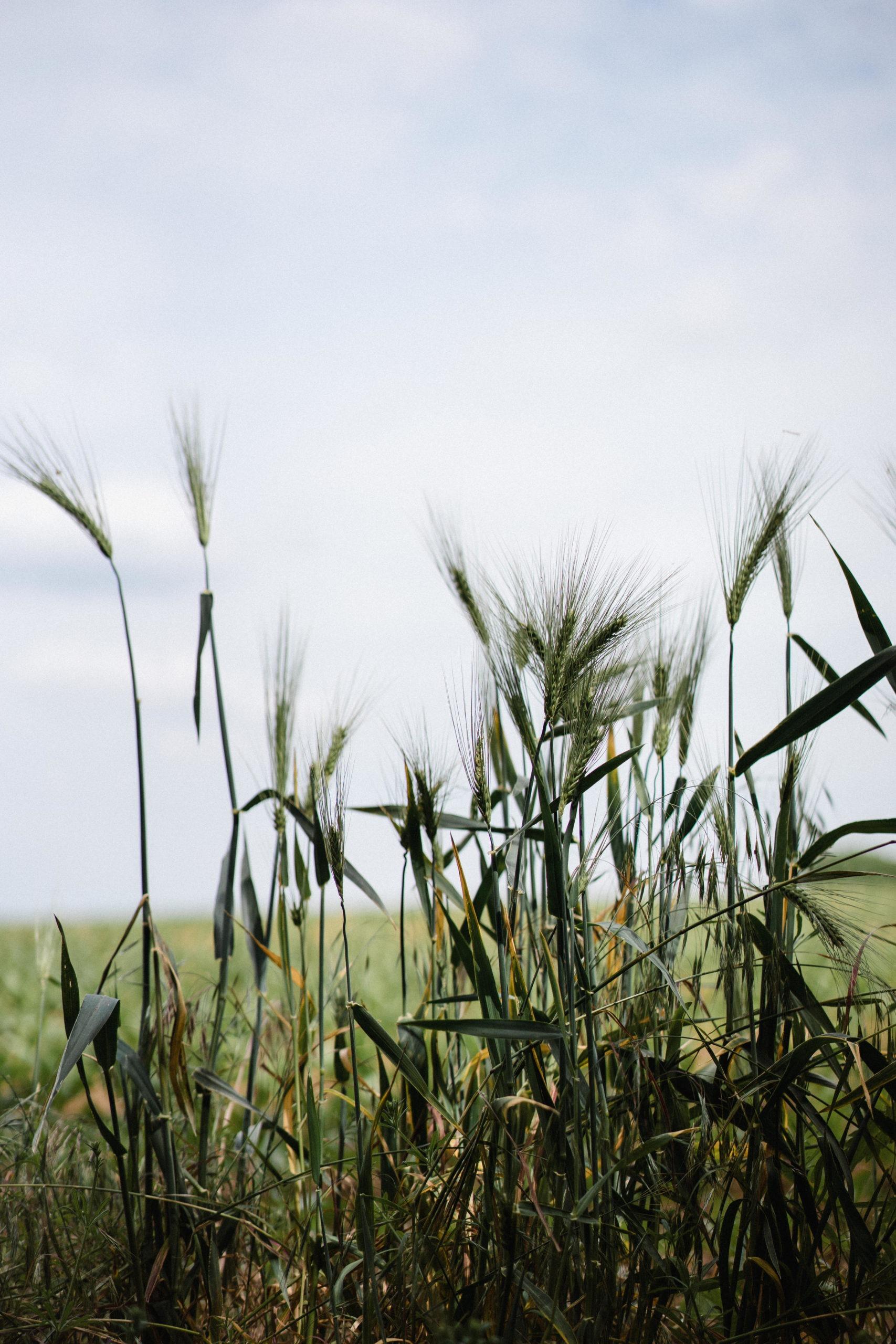 Promenade dans la campagne de Sombreffe 18