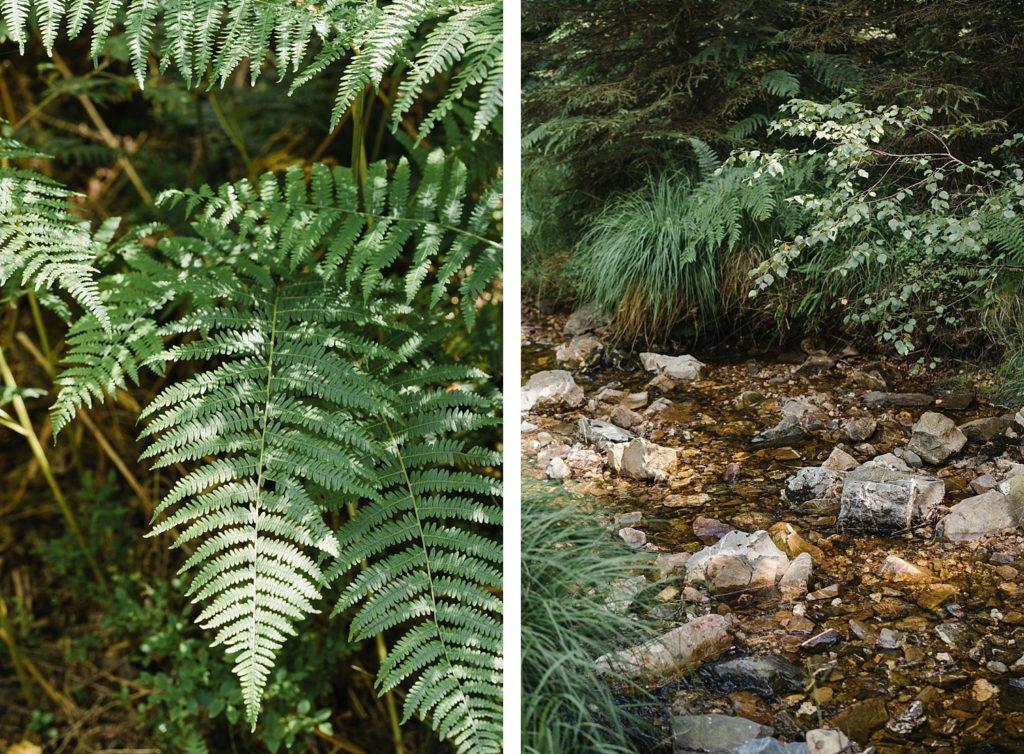 ruisseau Tros-Marets