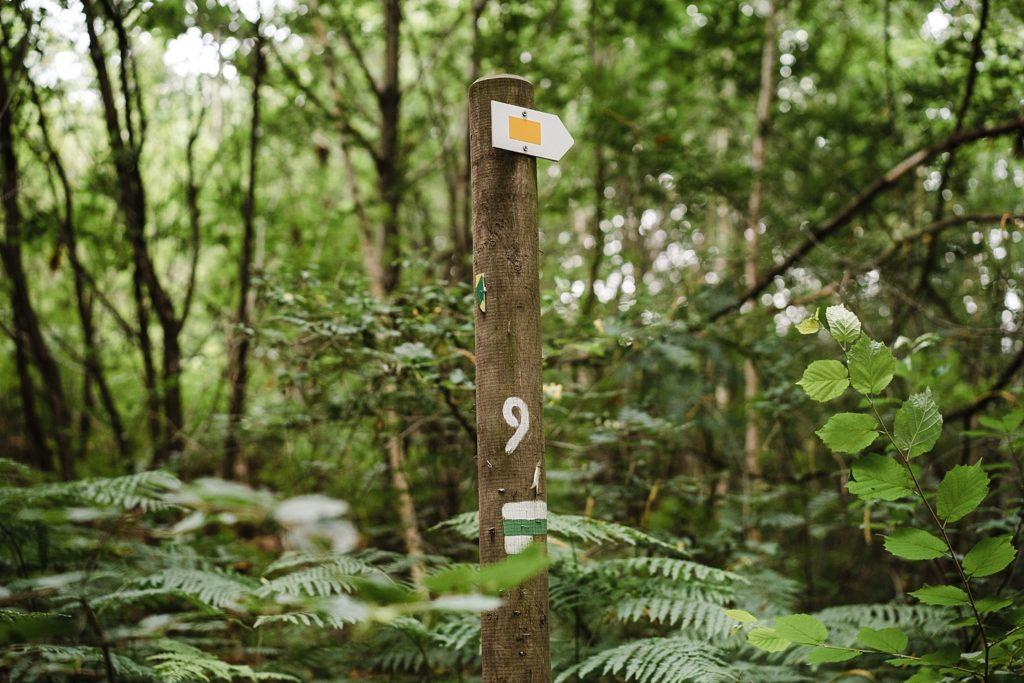 9km en forêt pour les ruines de Villers-la-ville 16