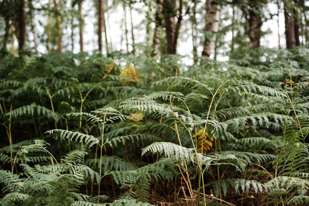 9km en forêt pour les ruines de Villers-la-ville 32