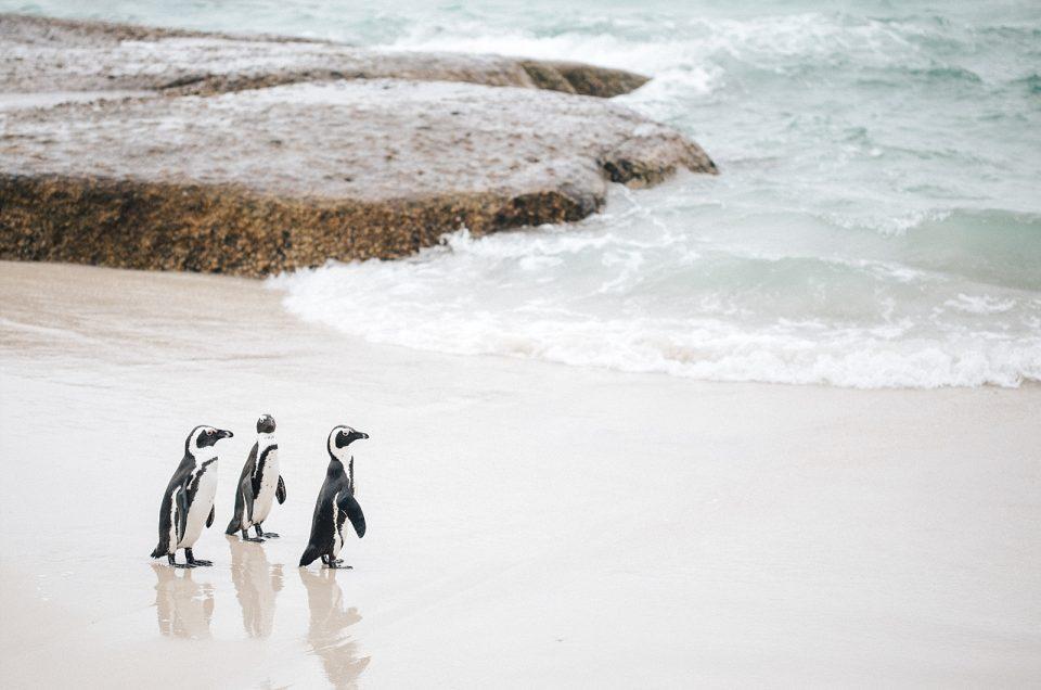 Cape Town avec Mystery travel – Boulders beach & Cap de bonne Espérance