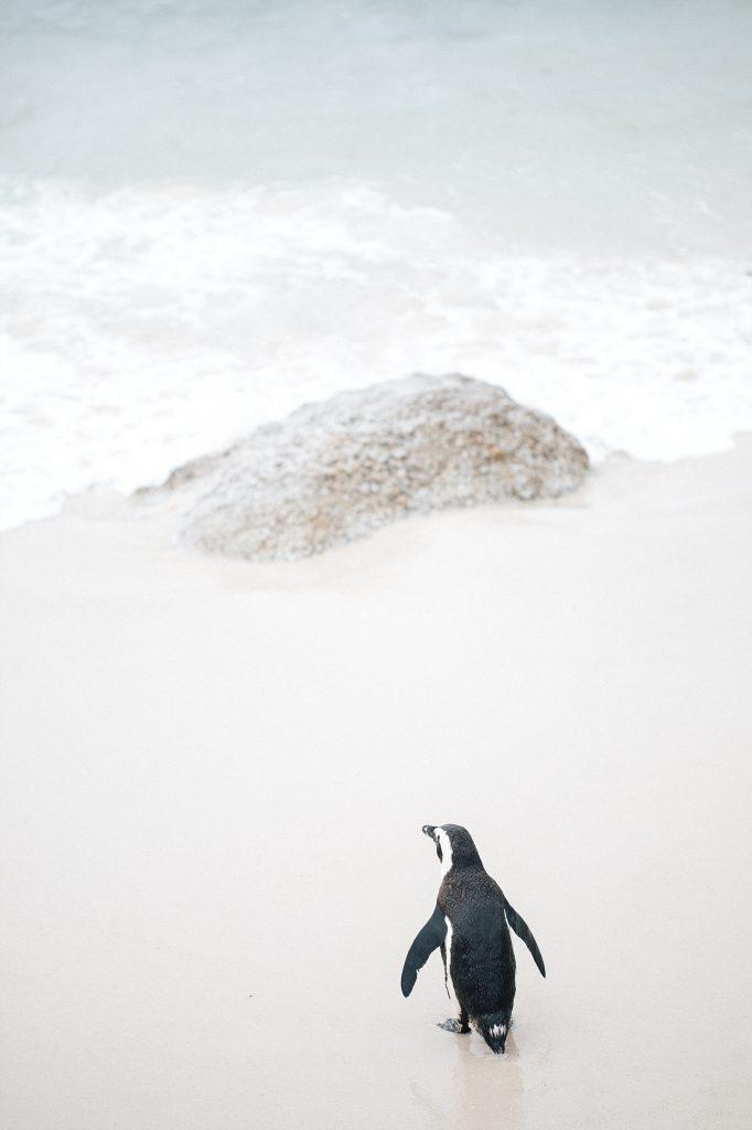 Cape Town avec Mystery travel - Boulders beach & Cap de bonne Espérance 4