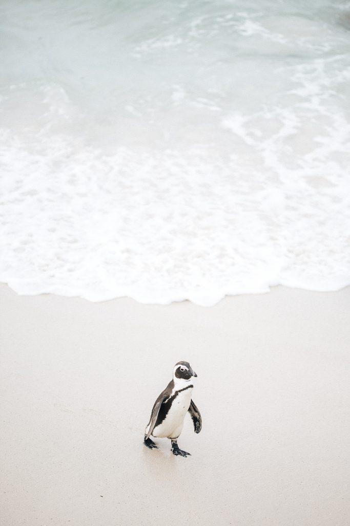 Cape Town avec Mystery travel - Boulders beach & Cap de bonne Espérance 5