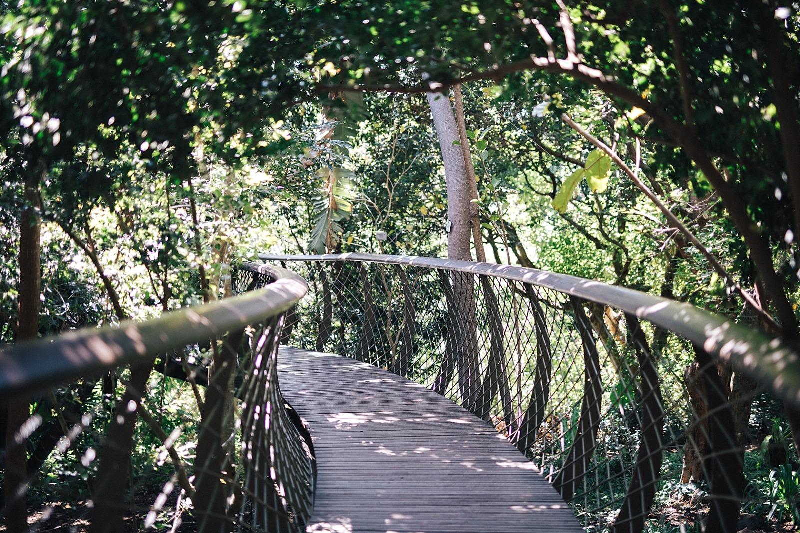 Jardin botanique de Kirstenbosch Cape town afrique du sud