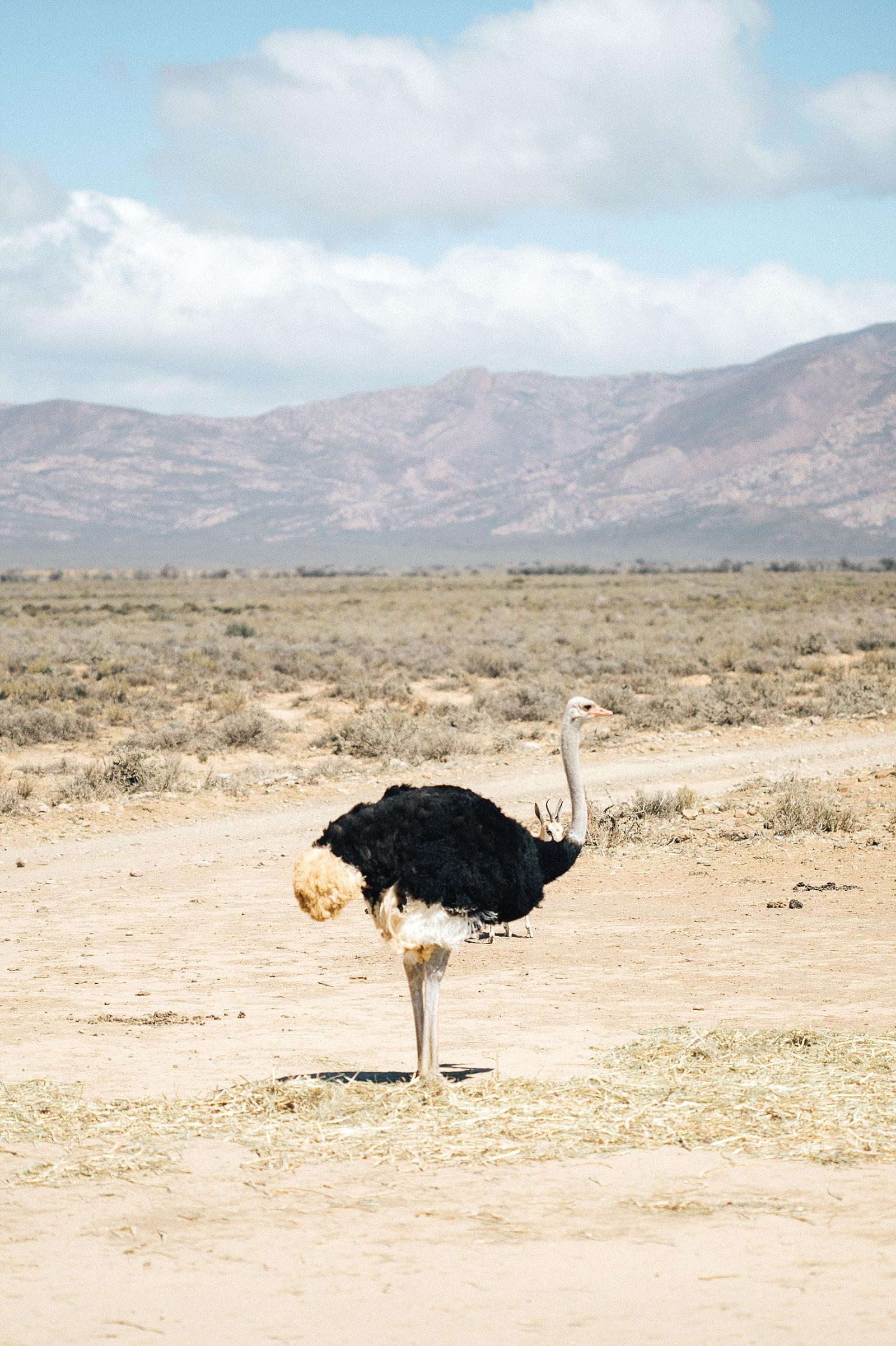 réserve d' Inverdoorn Cape town afrique du sud