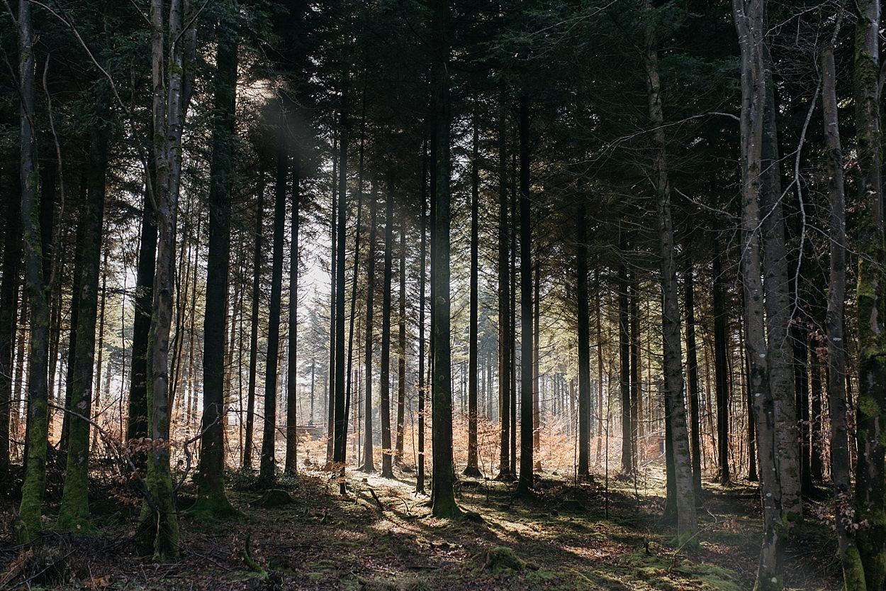 Center parcs trois forêts