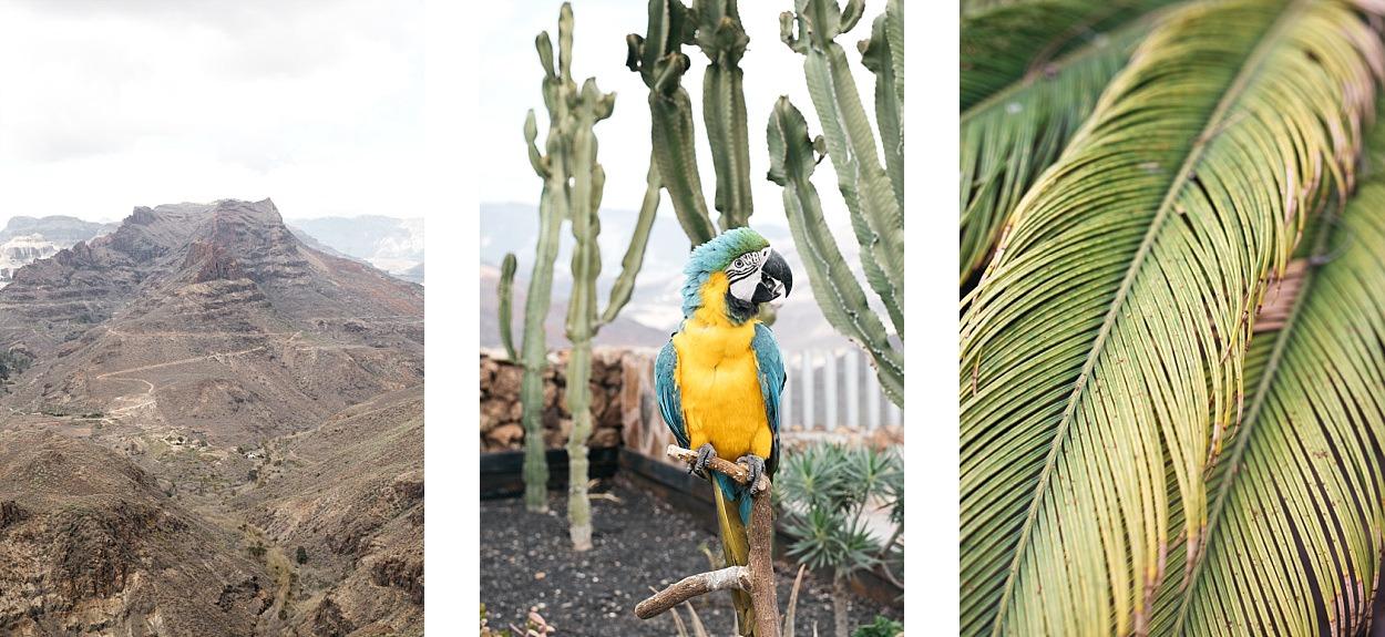 Gran Canaria, l'île des grandes aventures 11