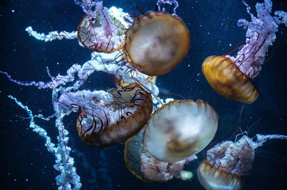 Nausicaa, le plus grand aquarium d'Europe