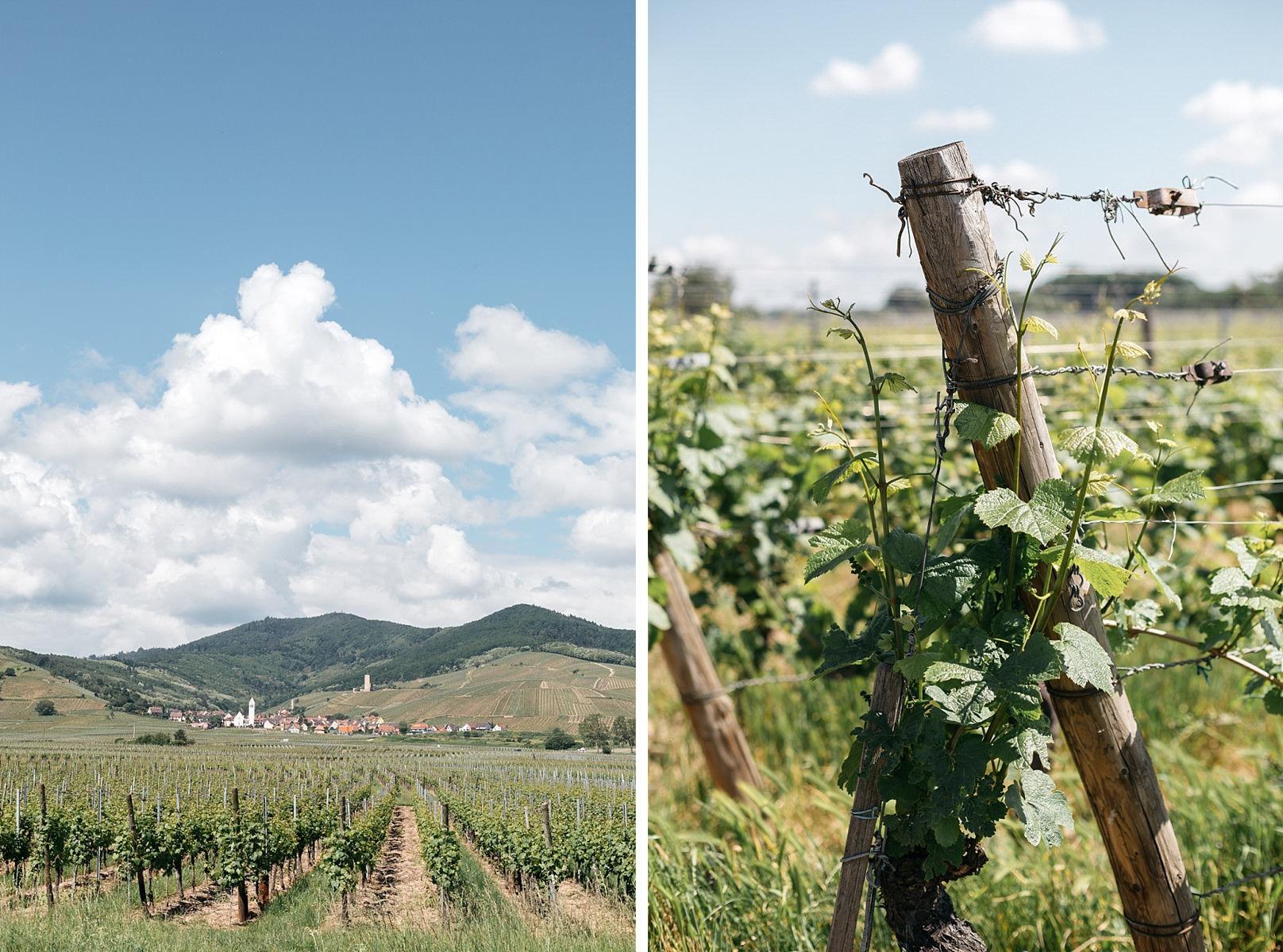 La route des vins Vosges