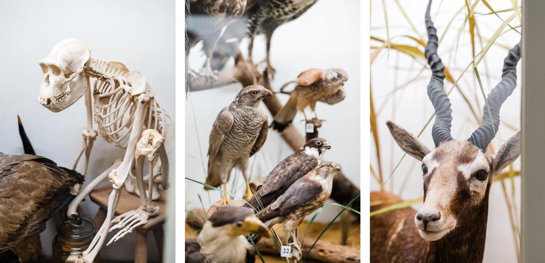 Tournai Musée histoire naturelle vivarium Belgique musée en famille sortie culturelle