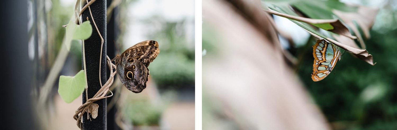 Tournai Musée histoire naturelle vivarium Belgique musée en famille sortie culturelle serre à papillons