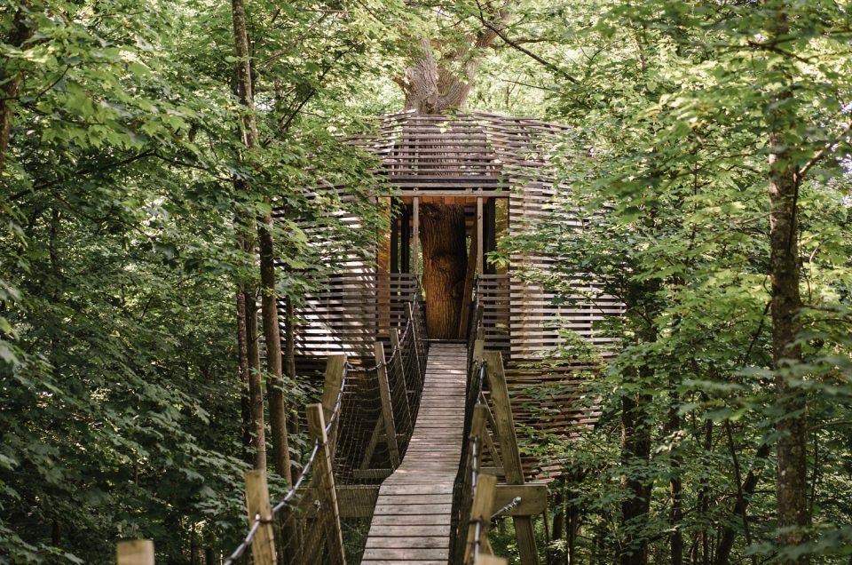Nuit dans les arbres des Coucoo cabanes Grands chênes