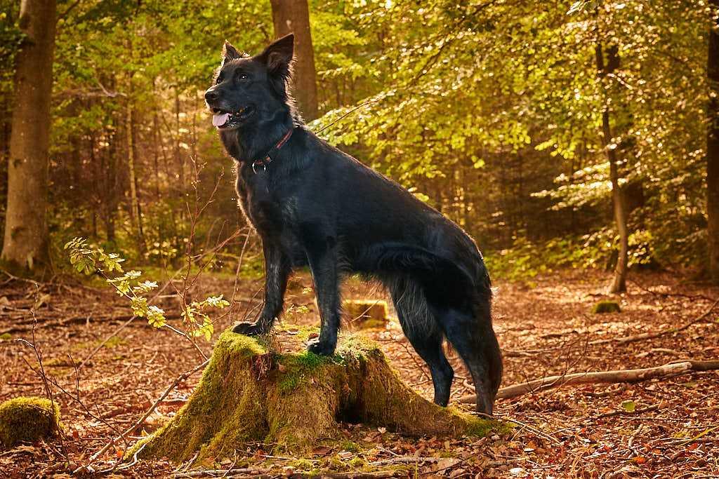 hundefoto hundefotograf fotografering af hunde