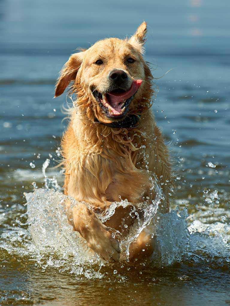 hundefoto hundefotograf