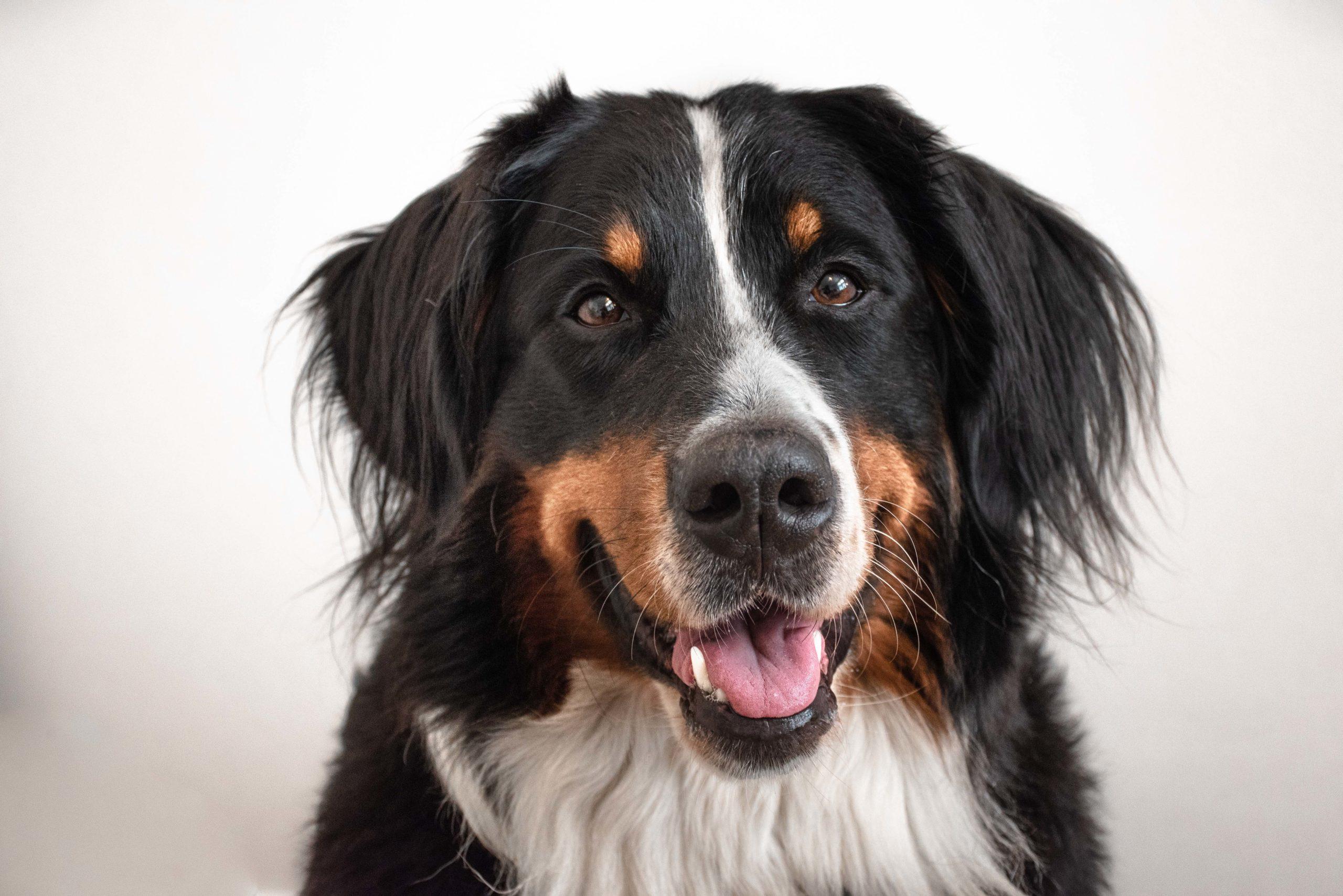 Hunde-Krankenversicherung der Bundes28